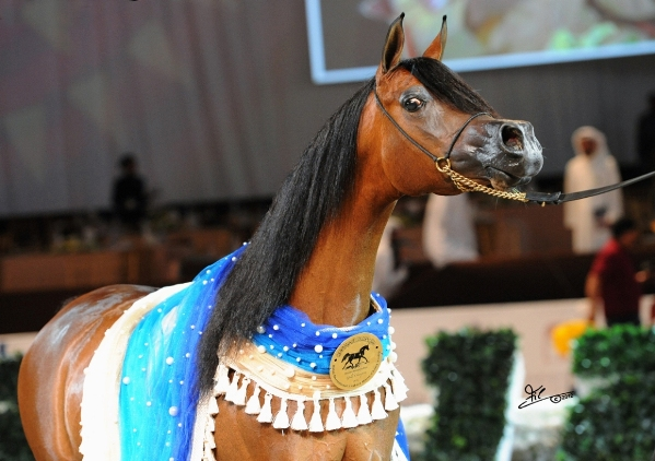 Dubai International Arabian Horse Championship 2013
