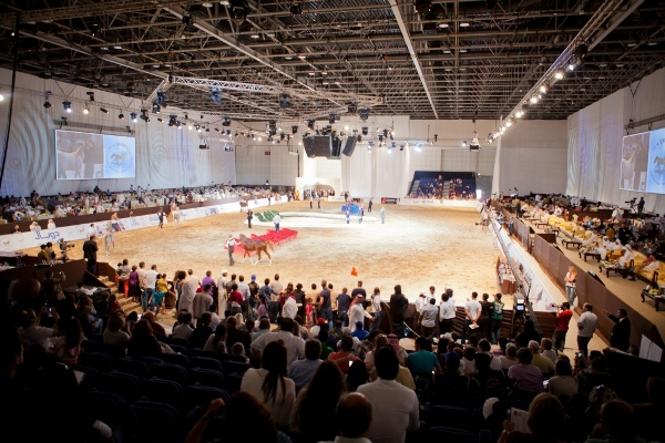 Dubai International Arabian Horse Championship